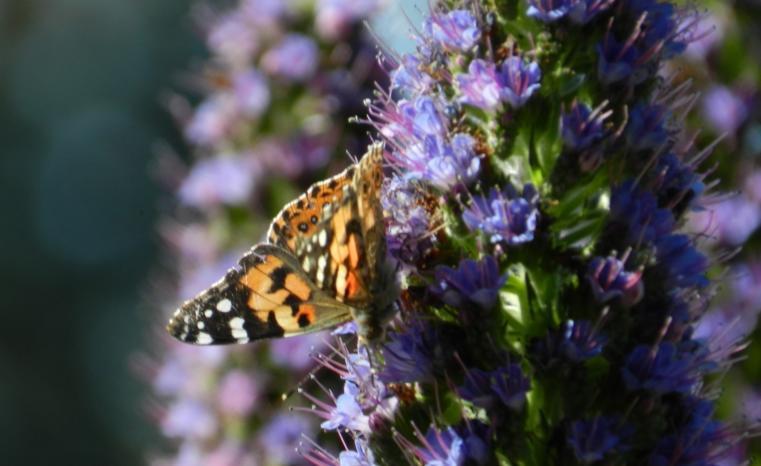 butterfly flower Resized